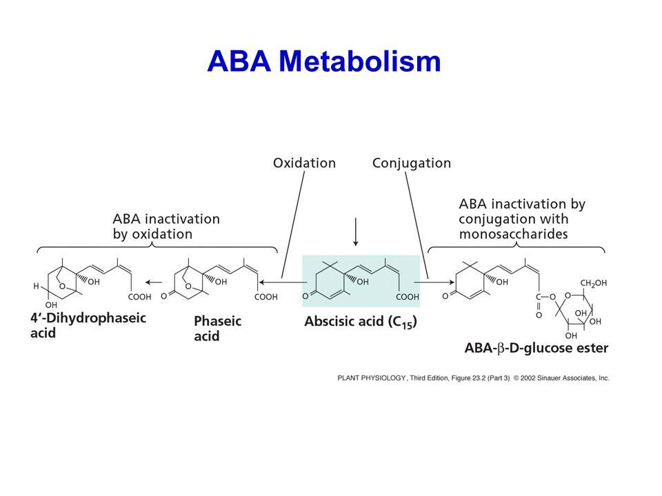 ABA Metabolism