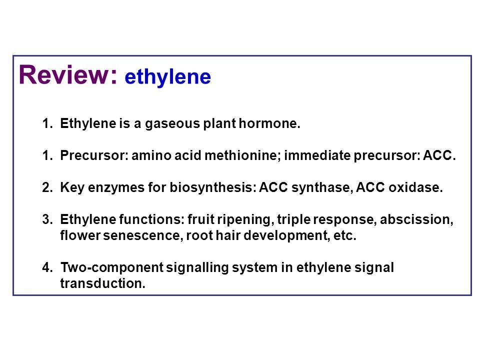 Review: ethylene 1.Ethylene is a gaseous plant hormone. 1.Precursor: amino acid methionine; immediate precursor: ACC. 2.Key enzymes for biosynthesis:
