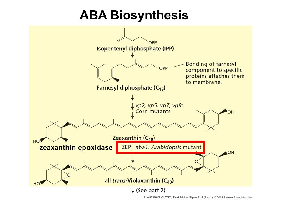 ABA Induces the Increase of Cytosolic Calcium