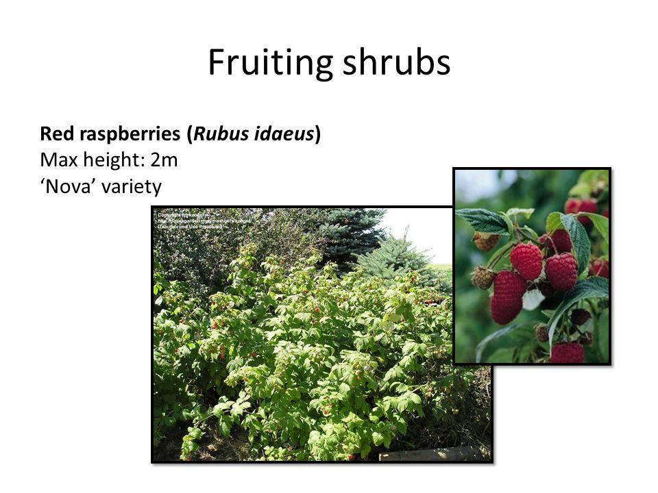 Fruiting shrubs Red raspberries (Rubus idaeus) Max height: 2m 'Nova' variety