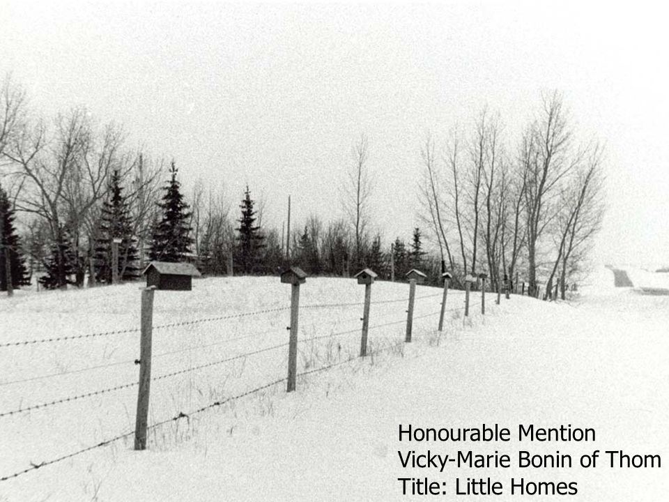 Honourable Mention Vicky-Marie Bonin of Thom Title: Little Homes