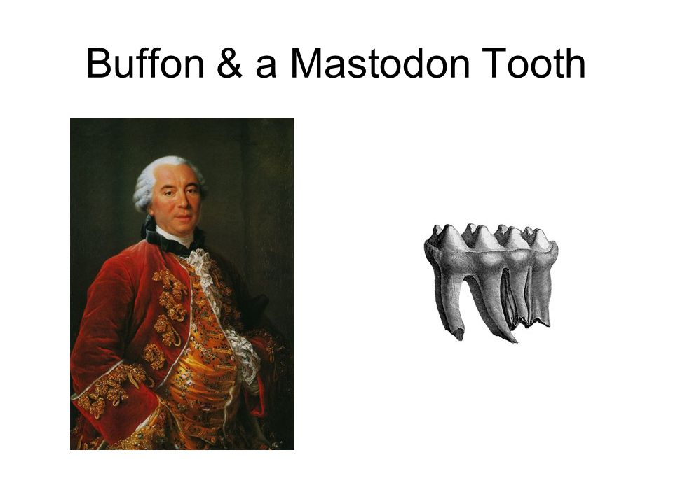 Buffon & a Mastodon Tooth