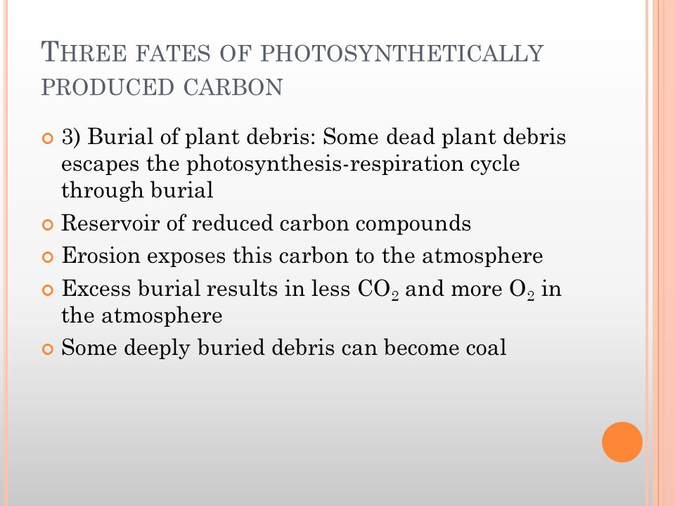 T HREE FATES OF PHOTOSYNTHETICALLY PRODUCED CARBON 3) Burial of plant debris: Some dead plant debris escapes the photosynthesis-respiration cycle thro
