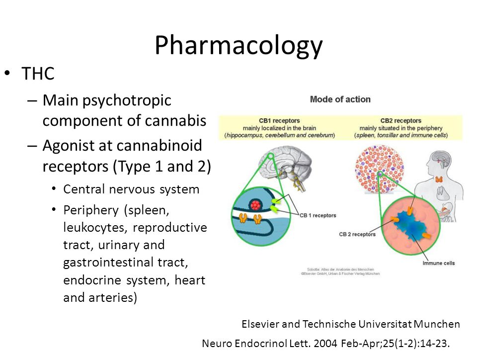 Pharmacology THC – Main psychotropic component of cannabis – Agonist at cannabinoid receptors (Type 1 and 2) Central nervous system Periphery (spleen,