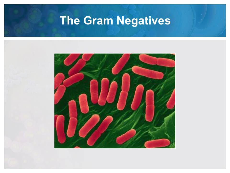 The Gram Negatives