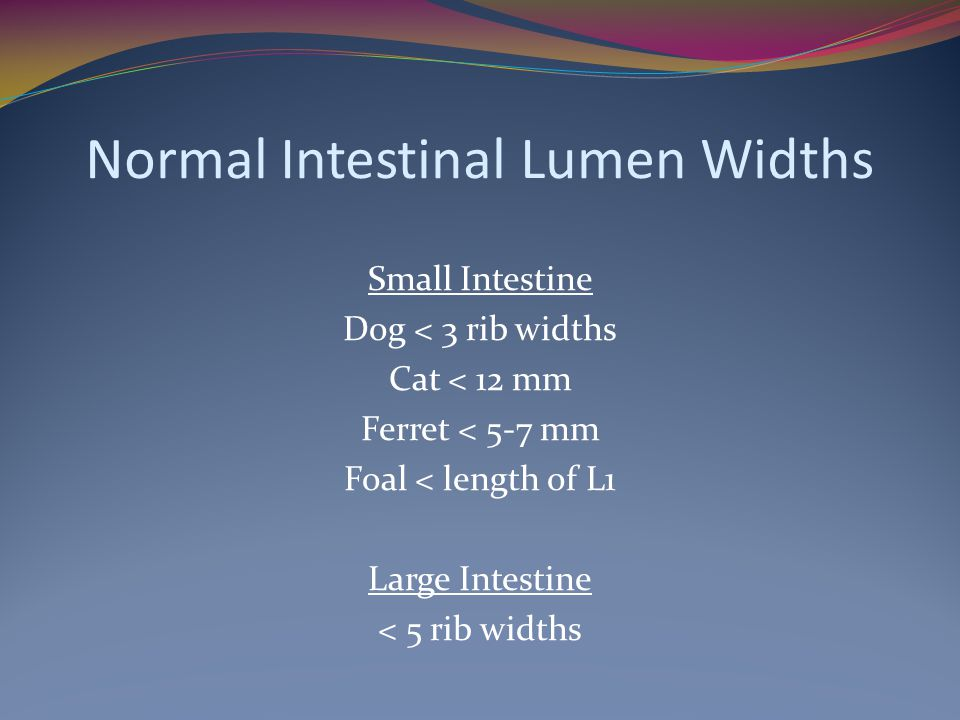 Normal Intestinal Lumen Widths Small Intestine Dog < 3 rib widths Cat < 12 mm Ferret < 5-7 mm Foal < length of L1 Large Intestine < 5 rib widths
