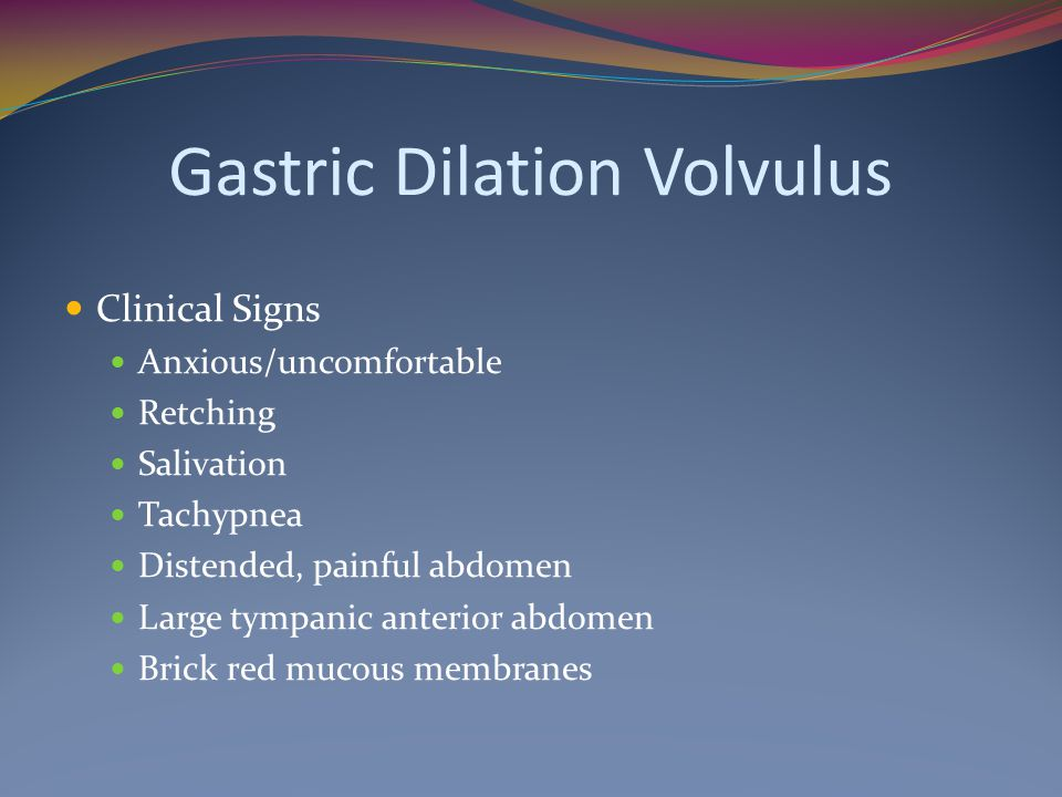 Gastric Dilation Volvulus Clinical Signs Anxious/uncomfortable Retching Salivation Tachypnea Distended, painful abdomen Large tympanic anterior abdome
