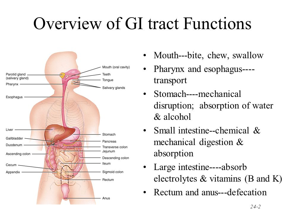 Disorders of GI tract and Accessory Organs Colitis Hepatitis Obstruction Cancer Pancreatitis Cholecystitis Rectal Bleed 24-63