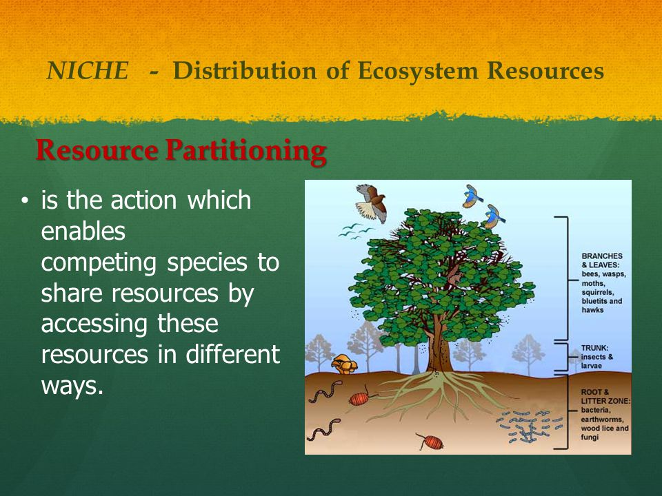 NICHE - Distribution of Ecosystem Resources Resource Partitioning is the action which enables competing species to share resources by accessing these resources in different ways.