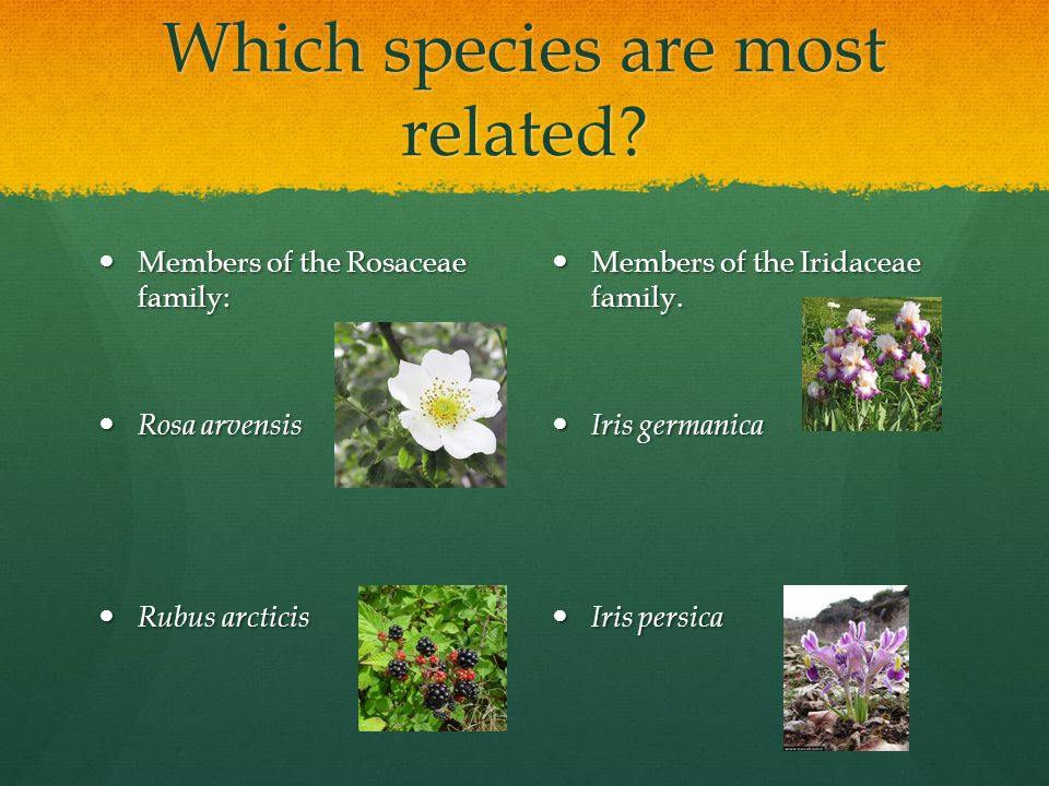 Which species are most related.