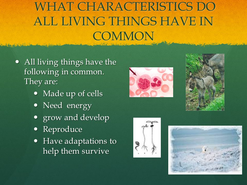 WHAT CHARACTERISTICS DO ALL LIVING THINGS HAVE IN COMMON WHAT CHARACTERISTICS DO ALL LIVING THINGS HAVE IN COMMON All living things have the following in common.