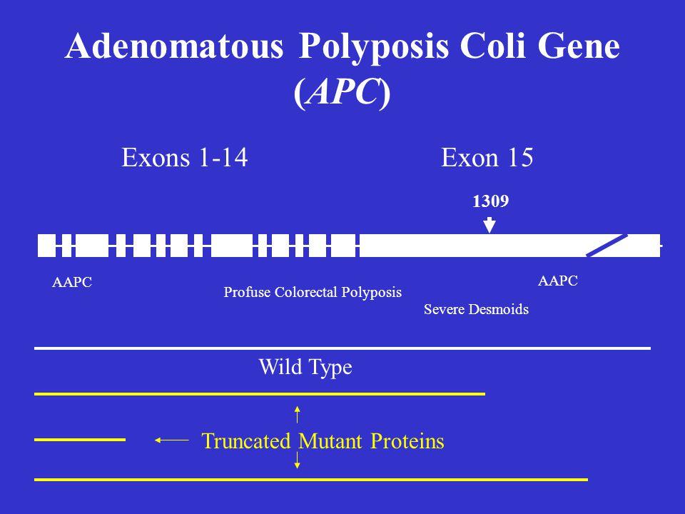 Exons 1-14Exon 15 AAPC Severe Desmoids Profuse Colorectal Polyposis 1309 Adenomatous Polyposis Coli Gene (APC) Wild Type Truncated Mutant Proteins