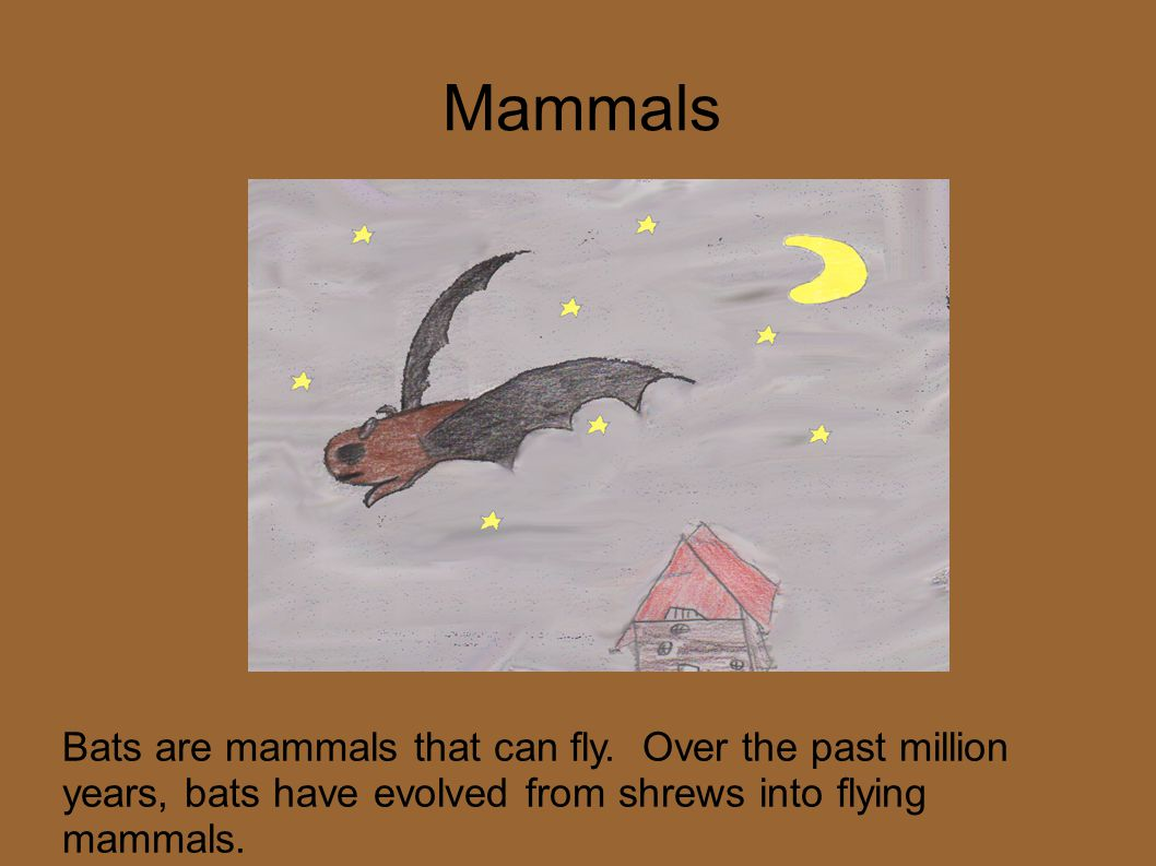 Mammals Bats are mammals that can fly. Over the past million years, bats have evolved from shrews into flying mammals.
