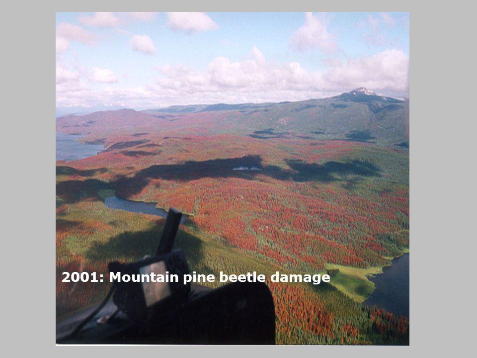 2001: Mountain pine beetle damage