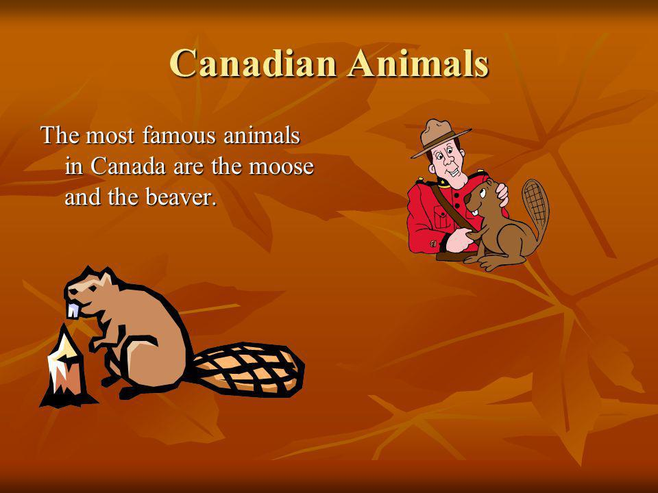 Canadian Animals The most famous animals in Canada are the moose and the beaver.