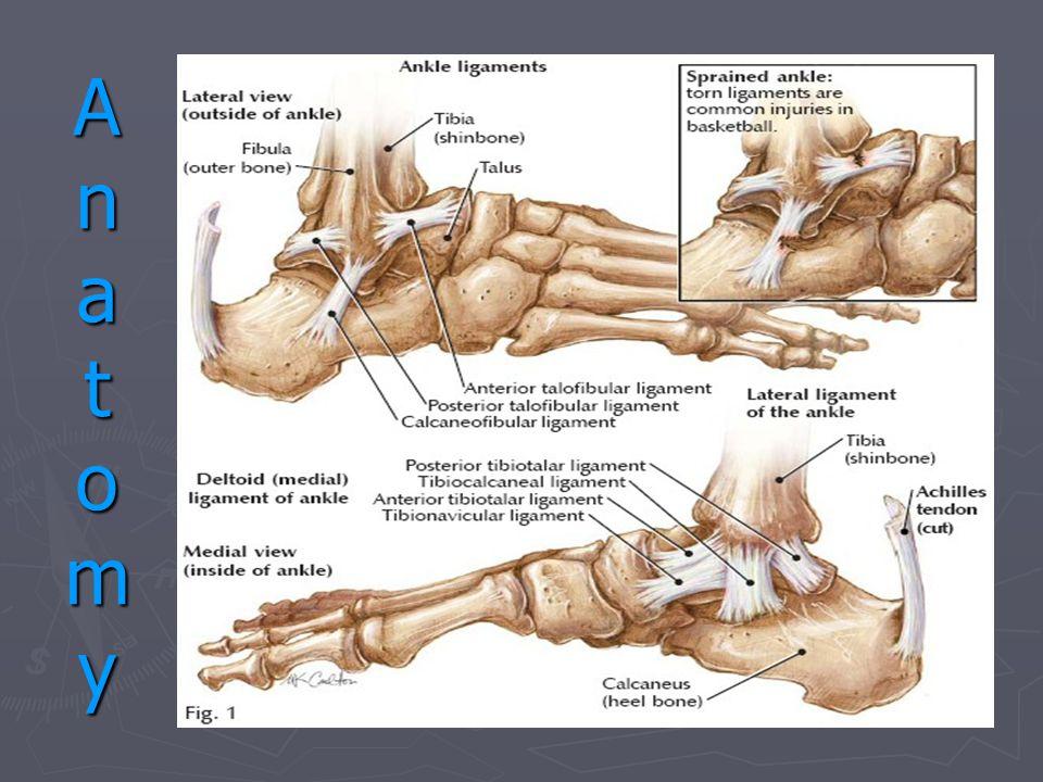 AnatomyAnatomyAnatomyAnatomy
