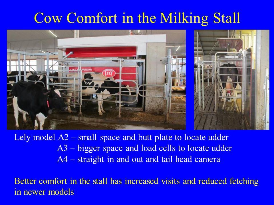 Cow Comfort in the Milking Stall Lely model A2 – small space and butt plate to locate udder A3 – bigger space and load cells to locate udder A4 – stra
