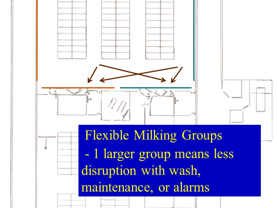 Flexible Milking Groups - 1 larger group means less disruption with wash, maintenance, or alarms