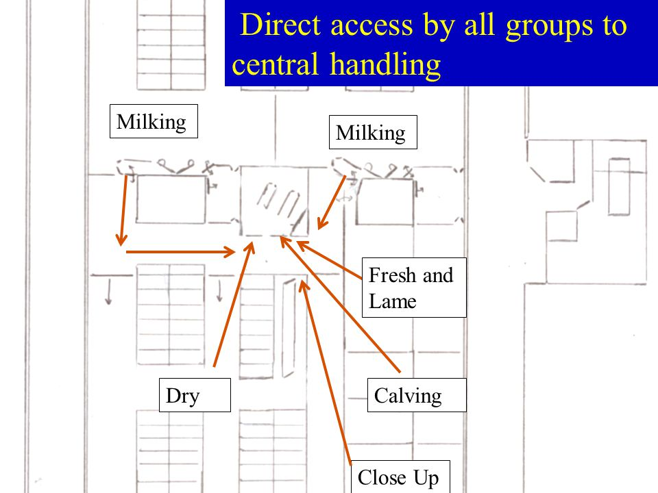 Milking Dry Close Up Calving Milking Fresh and Lame Direct access by all groups to central handling