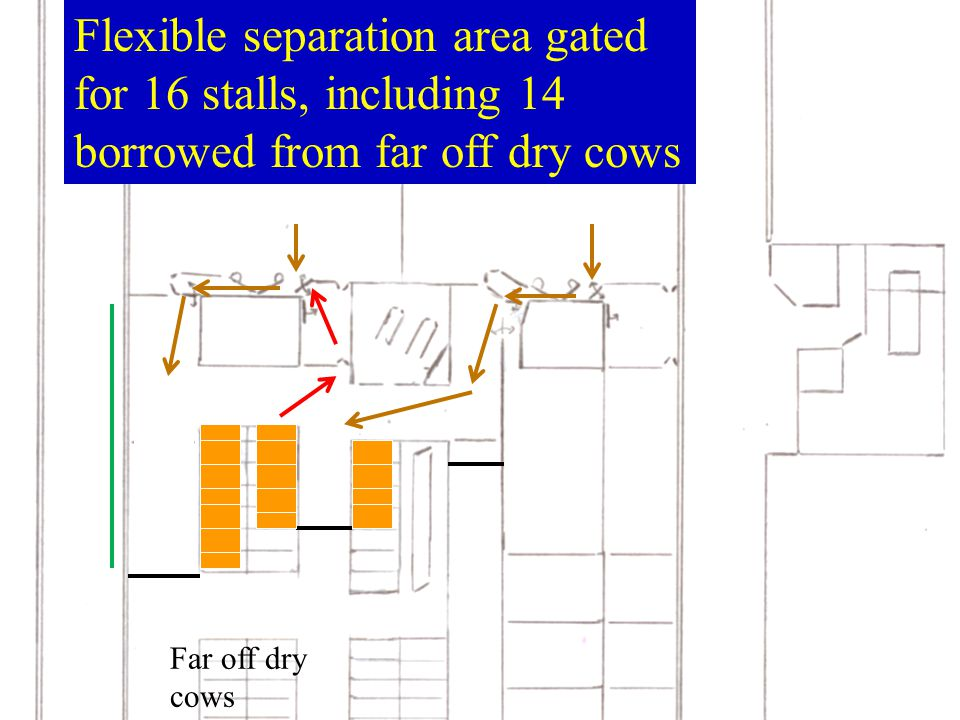 Flexible separation area gated for 16 stalls, including 14 borrowed from far off dry cows Far off dry cows