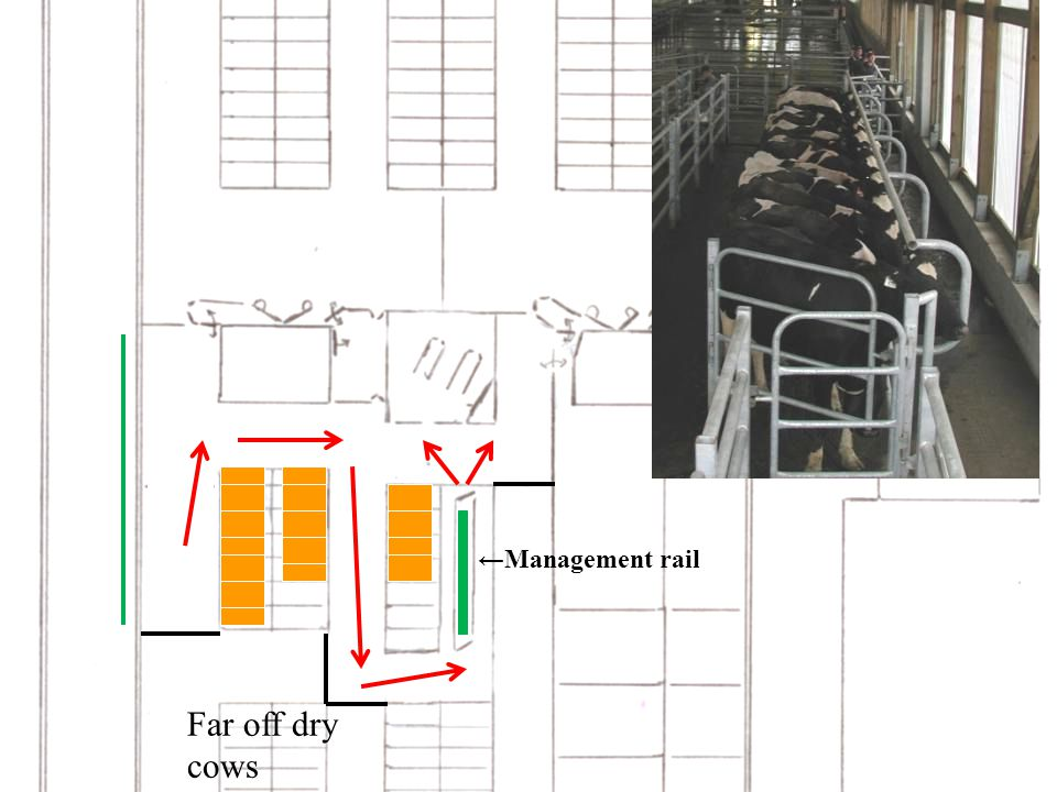 Far off dry cows ←Management rail