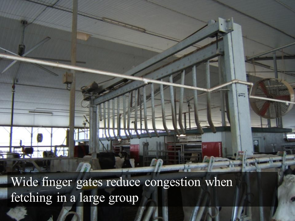 Wide finger gates reduce congestion when fetching in a large group