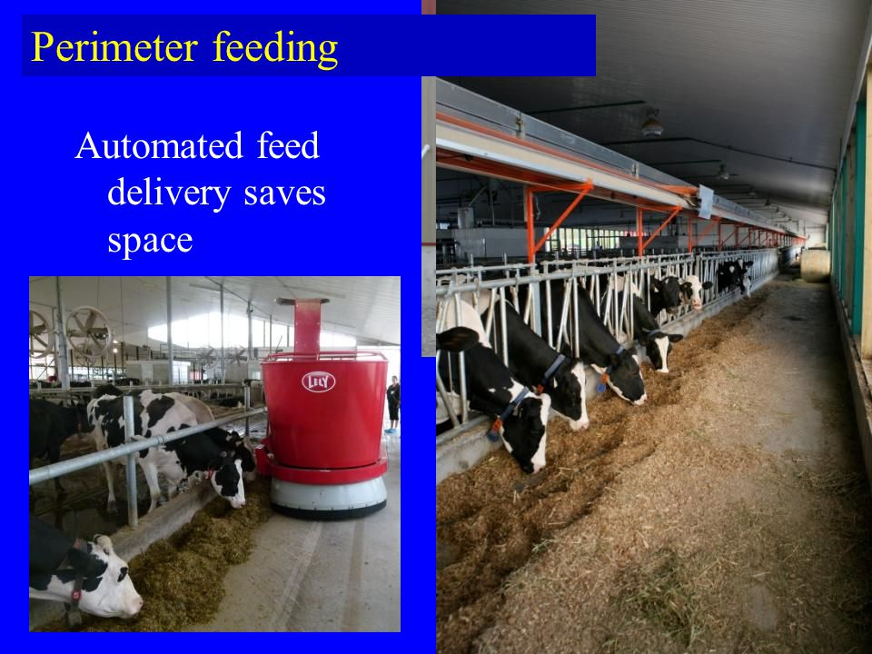 Perimeter feeding Automated feed delivery saves space