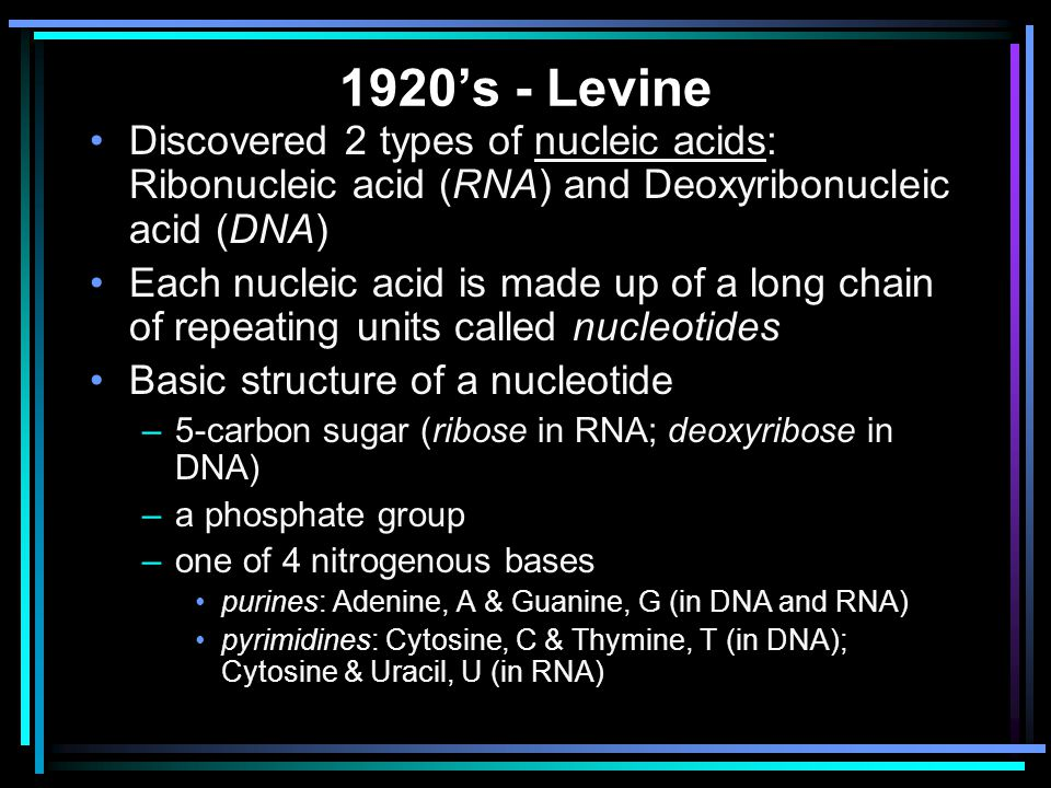 Gene Expression (Protein Synthesis) The transfer of genetic information from DNA to protein consists of two processes: 1.