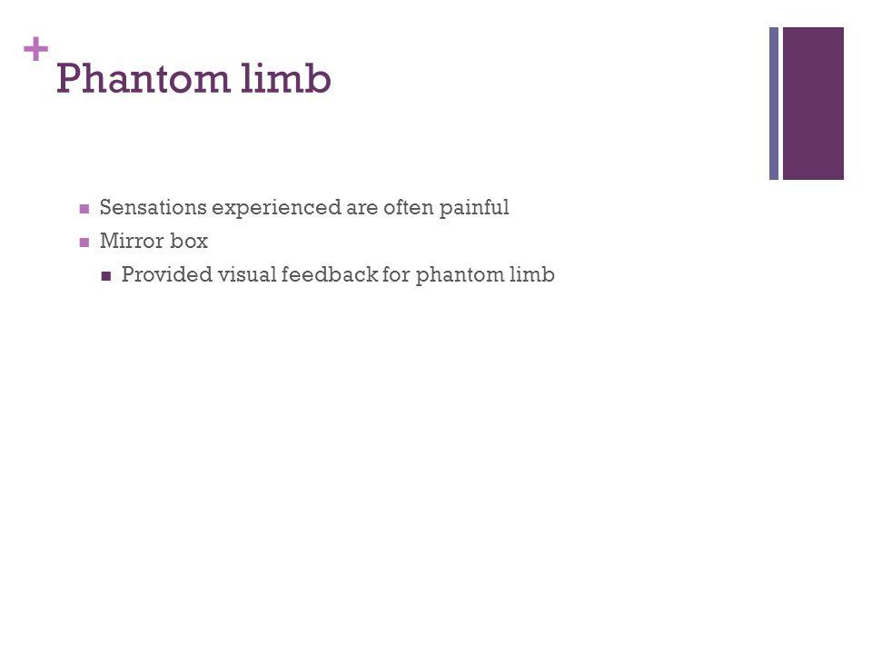 + Phantom limb Sensations experienced are often painful Mirror box Provided visual feedback for phantom limb