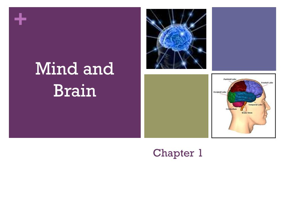 + Mind and Brain Chapter 1