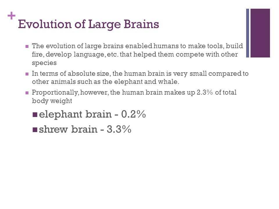 + Evolution of Large Brains The evolution of large brains enabled humans to make tools, build fire, develop language, etc.