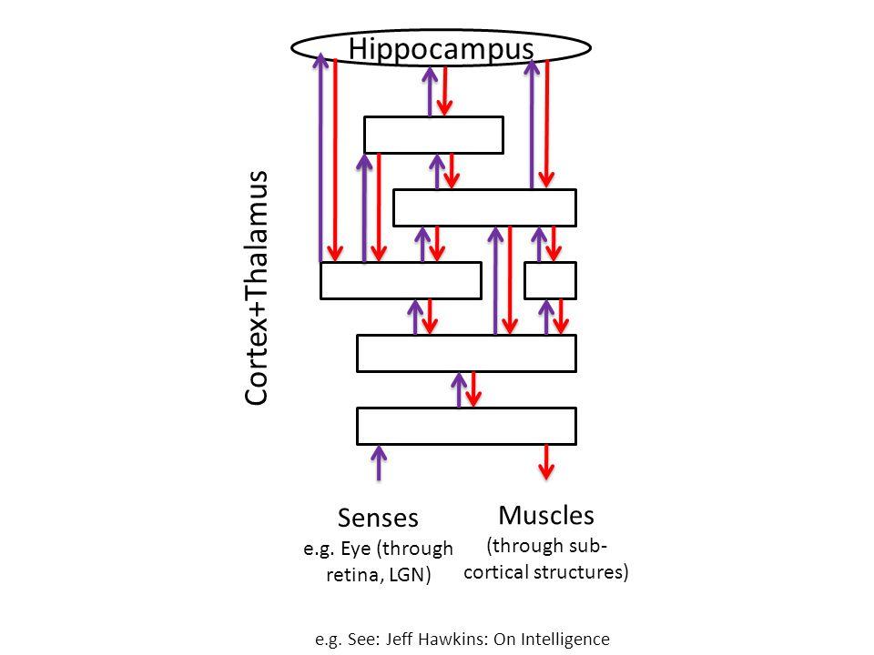Senses e.g. Eye (through retina, LGN) Muscles (through sub- cortical structures) Hippocampus Cortex+Thalamus e.g. See: Jeff Hawkins: On Intelligence