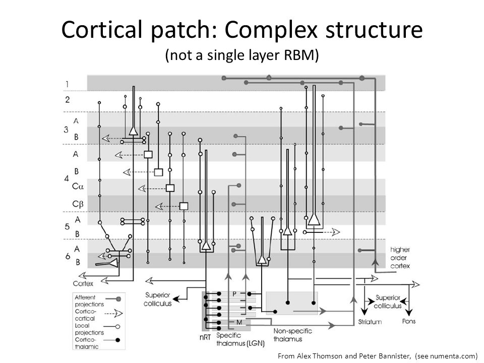 Cortical patch: Complex structure (not a single layer RBM) From Alex Thomson and Peter Bannister, (see numenta.com)