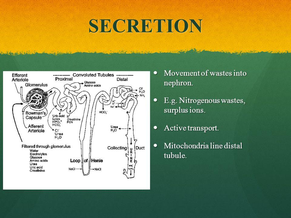 SECRETION Movement of wastes into nephron.E.g. Nitrogenous wastes, surplus ions.