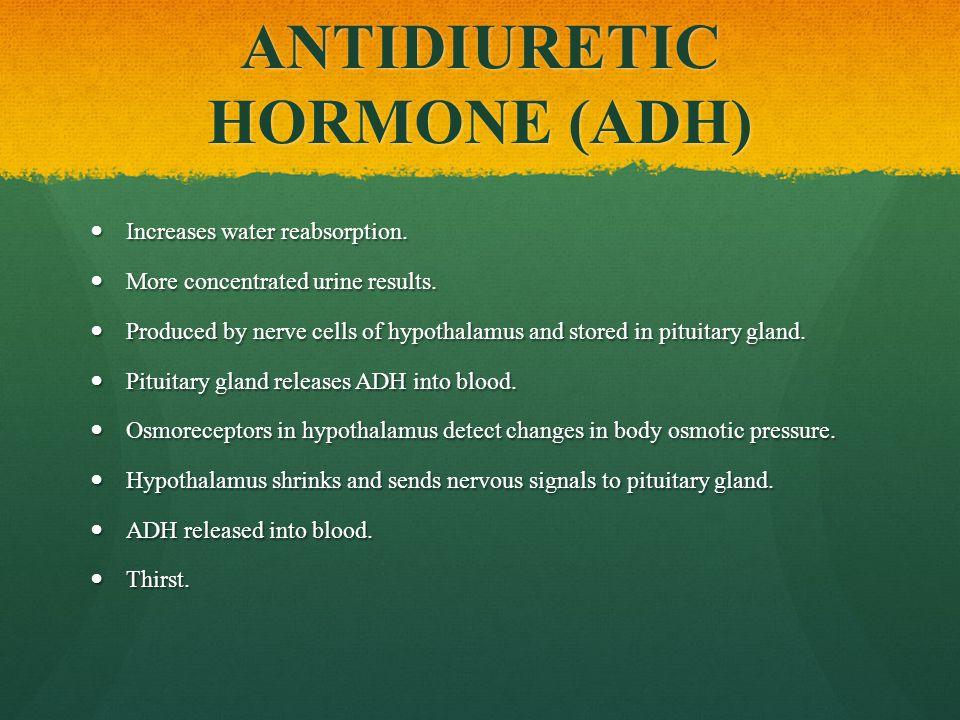 ANTIDIURETIC HORMONE (ADH) Increases water reabsorption.