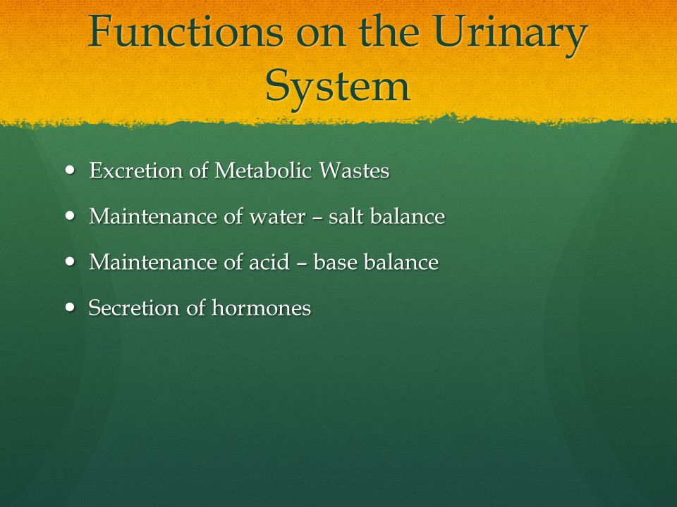 Functions on the Urinary System Excretion of Metabolic Wastes Excretion of Metabolic Wastes Maintenance of water – salt balance Maintenance of water – salt balance Maintenance of acid – base balance Maintenance of acid – base balance Secretion of hormones Secretion of hormones
