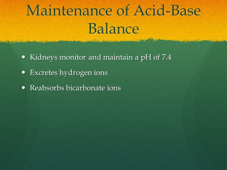 Maintenance of Acid-Base Balance Kidneys monitor and maintain a pH of 7.4 Kidneys monitor and maintain a pH of 7.4 Excretes hydrogen ions Excretes hydrogen ions Reabsorbs bicarbonate ions Reabsorbs bicarbonate ions