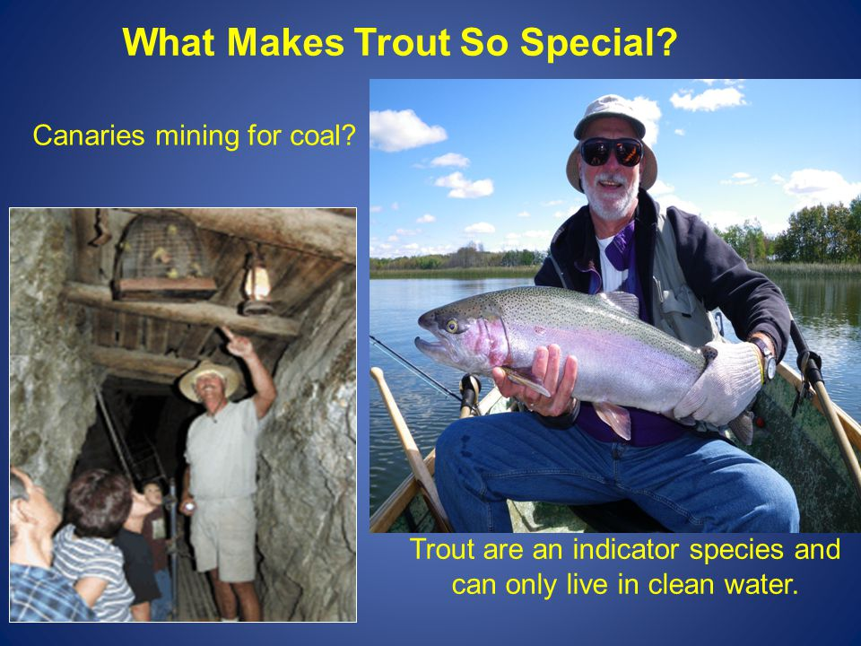 What Makes Trout So Special. Trout are an indicator species and can only live in clean water.