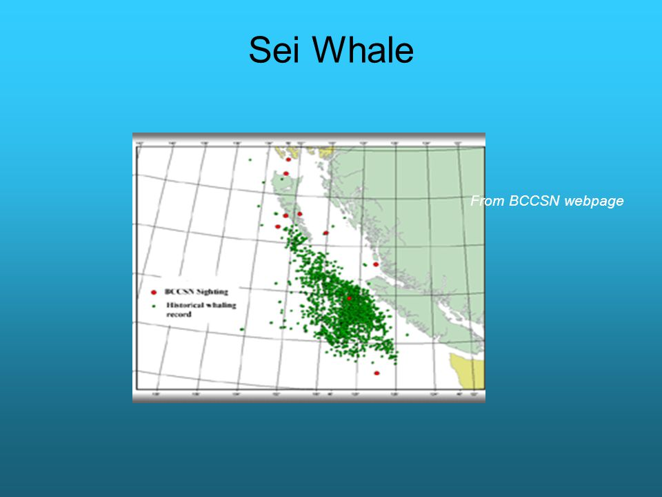 Sei Whale From BCCSN webpage