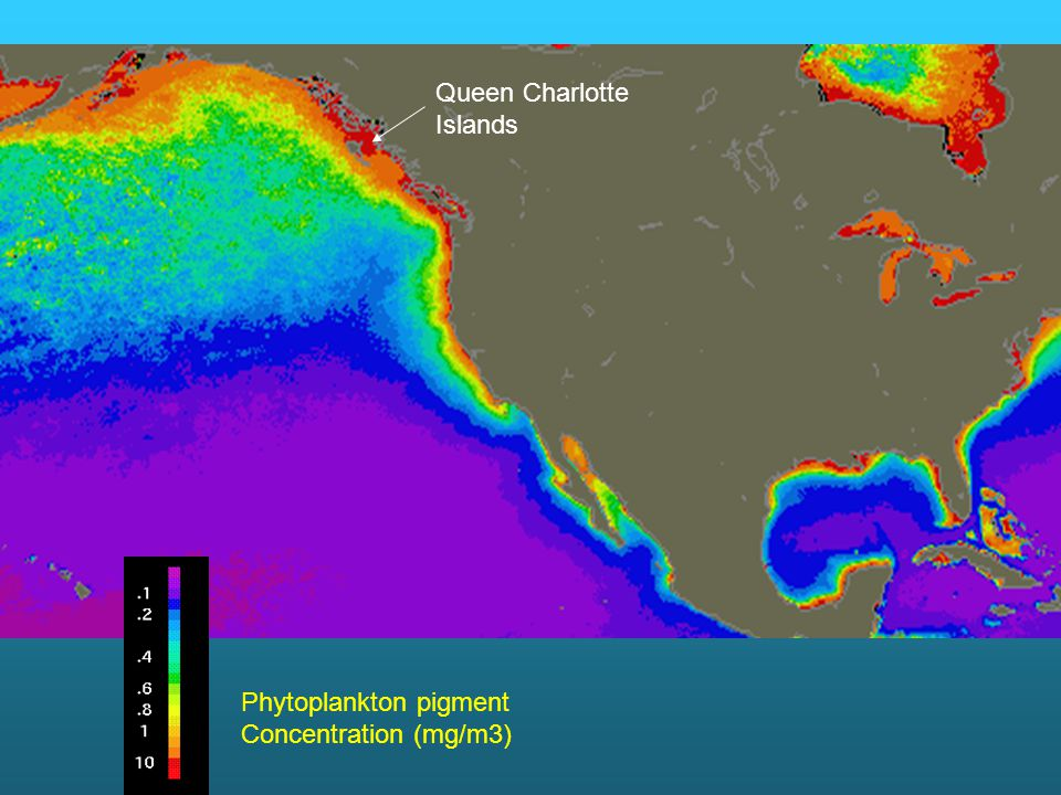 Phytoplankton pigment Concentration (mg/m3) Queen Charlotte Islands