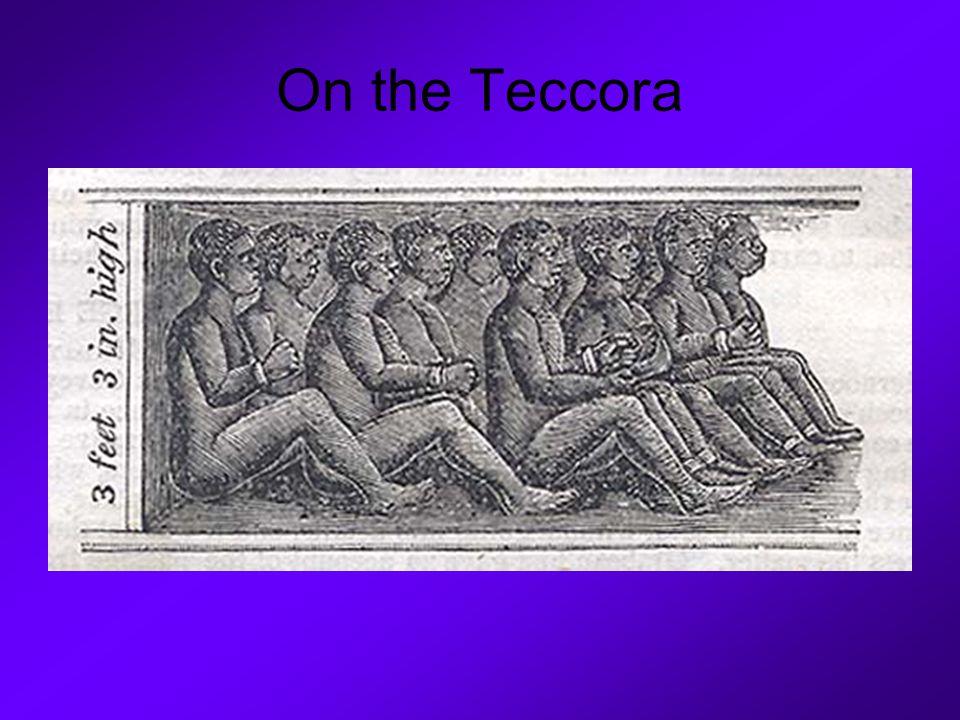 On the Teccora