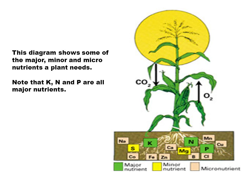 This diagram shows some of the major, minor and micro nutrients a plant needs. Note that K, N and P are all major nutrients.