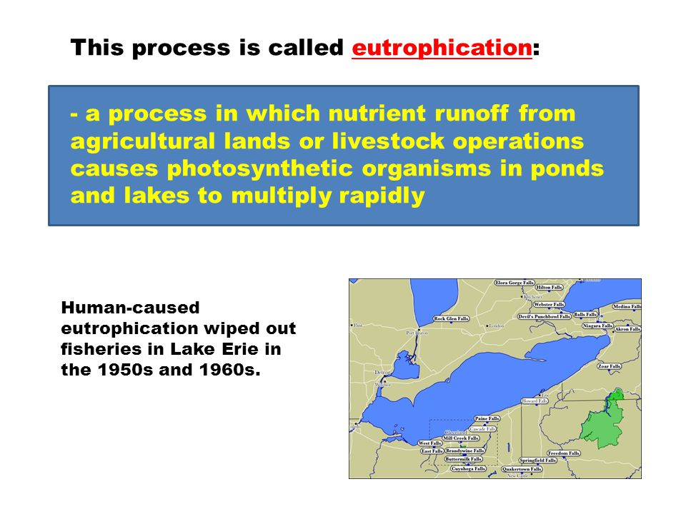 This process is called eutrophication: - a process in which nutrient runoff from agricultural lands or livestock operations causes photosynthetic orga