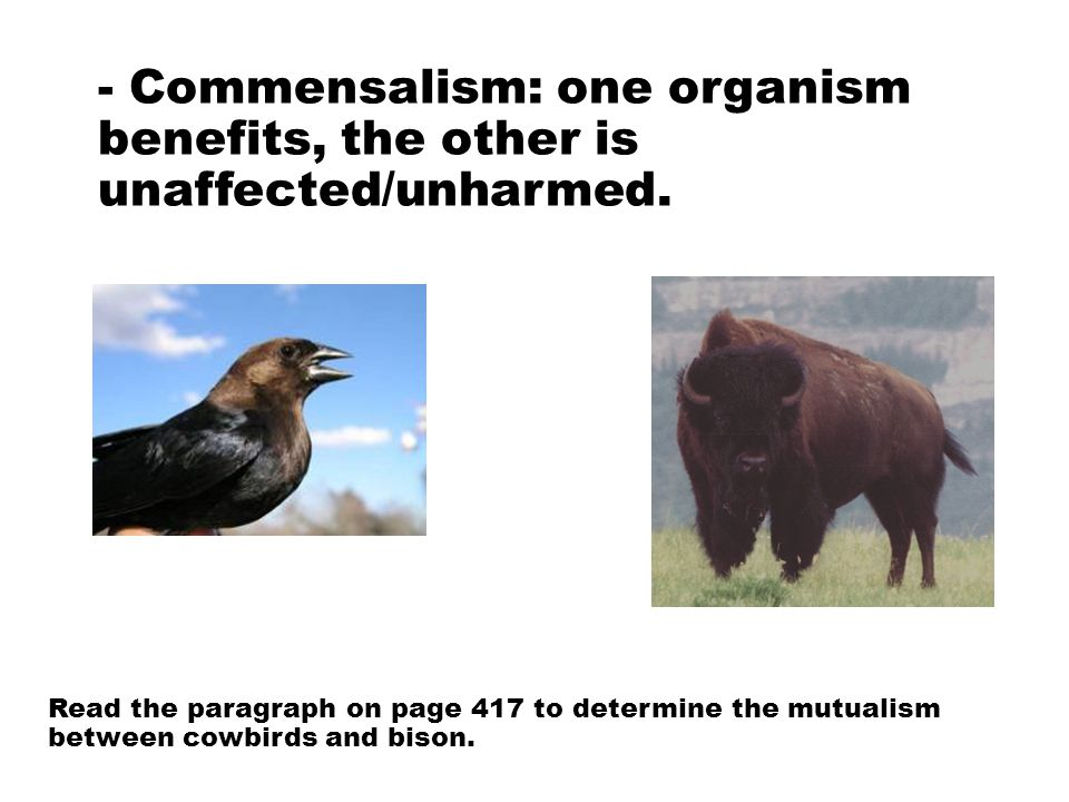 - Commensalism: one organism benefits, the other is unaffected/unharmed. Read the paragraph on page 417 to determine the mutualism between cowbirds an