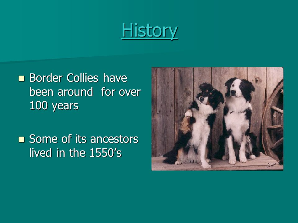 Dogs Name 'Border' comes from the border between England and Scotland 'Border' comes from the border between England and Scotland 'Collie' means anything useful and coal 'Collie' means anything useful and coal