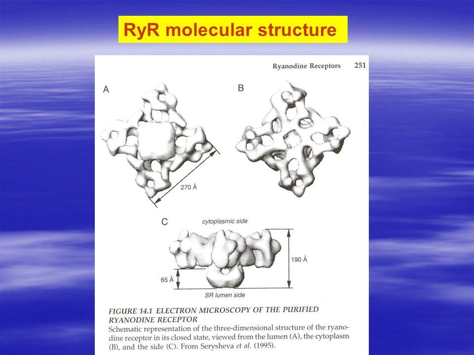 RyR molecular structure