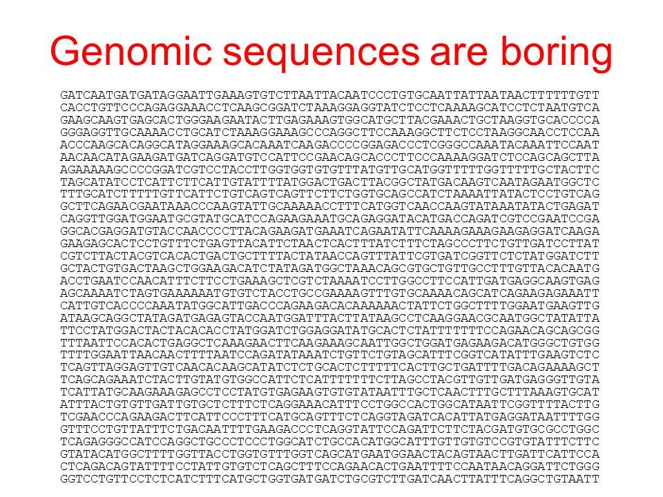 Genomic sequences are boring GATCAATGATGATAGGAATTGAAAGTGTCTTAATTACAATCCCTGTGCAATTATTAATAACTTTTTTGTT CACCTGTTCCCAGAGGAAACCTCAAGCGGATCTAAAGGAGGTATCTCCTCAAAAGCATCCTCTAATGTCA GAAGCAAGTGAGCACTGGGAAGAATACTTGAGAAAGTGGCATGCTTACGAAACTGCTAAGGTGCACCCCA GGGAGGTTGCAAAACCTGCATCTAAAGGAAAGCCCAGGCTTCCAAAGGCTTCTCCTAAGGCAACCTCCAA ACCCAAGCACAGGCATAGGAAAGCACAAATCAAGACCCCGGAGACCCTCGGGCCAAATACAAATTCCAAT AACAACATAGAAGATGATCAGGATGTCCATTCCGAACAGCACCCTTCCCAAAAGGATCTCCAGCAGCTTA AGAAAAAGCCCCGGATCGTCCTACCTTGGTGGTGTGTTTATGTTGCATGGTTTTTGGTTTTTGCTACTTC TAGCATATCCTCATTCTTCATTGTATTTTATGGACTGACTTACGGCTATGACAAGTCAATAGAATGGCTC TTTGCATCTTTTTGTTCATTCTGTCAGTCAGTTCTTCTGGTGCAGCCATCTAAAATTATACTCCTGTCAG GCTTCAGAACGAATAAACCCAAGTATTGCAAAAACCTTTCATGGTCAACCAAGTATAAATATACTGAGAT CAGGTTGGATGGAATGCGTATGCATCCAGAAGAAATGCAGAGGATACATGACCAGATCGTCCGAATCCGA GGCACGAGGATGTACCAACCCCTTACAGAAGATGAAATCAGAATATTCAAAAGAAAGAAGAGGATCAAGA GAAGAGCACTCCTGTTTCTGAGTTACATTCTAACTCACTTTATCTTTCTAGCCCTTCTGTTGATCCTTAT CGTCTTACTACGTCACACTGACTGCTTTTACTATAACCAGTTTATTCGTGATCGGTTCTCTATGGATCTT GCTACTGTGACTAAGCTGGAAGACATCTATAGATGGCTAAACAGCGTGCTGTTGCCTTTGTTACACAATG ACCTGAATCCAACATTTCTTCCTGAAAGCTCGTCTAAAATCCTTGGCCTTCCATTGATGAGGCAAGTGAG AGCAAAATCTAGTGAAAAAATGTGTCTACCTGCCGAAAAGTTTGTGCAAAACAGCATCAGAAGAGAAATT CATTGTCACCCCAAATATGGCATTGACCCAGAAGACACAAAAAACTATTCTGGCTTTTGGAATGAAGTTG ATAAGCAGGCTATAGATGAGAGTACCAATGGATTTACTTATAAGCCTCAAGGAACGCAATGGCTATATTA TTCCTATGGACTACTACACACCTATGGATCTGGAGGATATGCACTCTATTTTTTTCCAGAACAGCAGCGG TTTAATTCCACACTGAGGCTCAAAGAACTTCAAGAAAGCAATTGGCTGGATGAGAAGACATGGGCTGTGG TTTTGGAATTAACAACTTTTAATCCAGATATAAATCTGTTCTGTAGCATTTCGGTCATATTTGAAGTCTC TCAGTTAGGAGTTGTCAACACAAGCATATCTCTGCACTCTTTTTCACTTGCTGATTTTGACAGAAAAGCT TCAGCAGAAATCTACTTGTATGTGGCCATTCTCATTTTTTTCTTAGCCTACGTTGTTGATGAGGGTTGTA TCATTATGCAAGAAAGAGCCTCCTATGTGAGAAGTGTGTATAATTTGCTCAACTTTGCTTTAAAGTGCAT ATTTACTGTGTTGATTGTGCTCTTTCTCAGGAAACATTTCCTGGCCACTGGCATAATTCGGTTTTACTTG TCGAACCCAGAAGACTTCATTCCCTTTCATGCAGTTTCTCAGGTAGATCACATTATGAGGATAATTTTGG GTTTCCTGTTATTTCTGACAATTTTGAAGACCCTCAGGTATTCCAGATTCTTCT