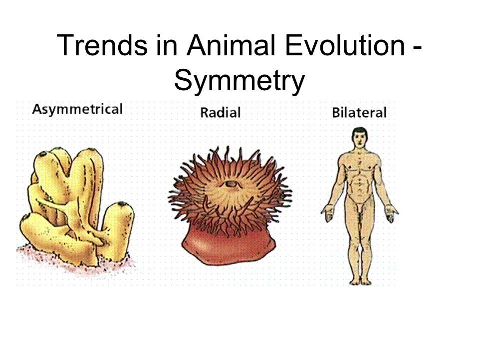 Trends in Animal Evolution - Symmetry