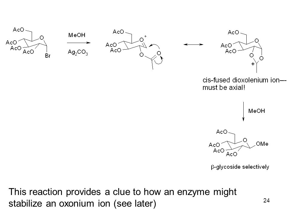 24 This reaction provides a clue to how an enzyme might stabilize an oxonium ion (see later)