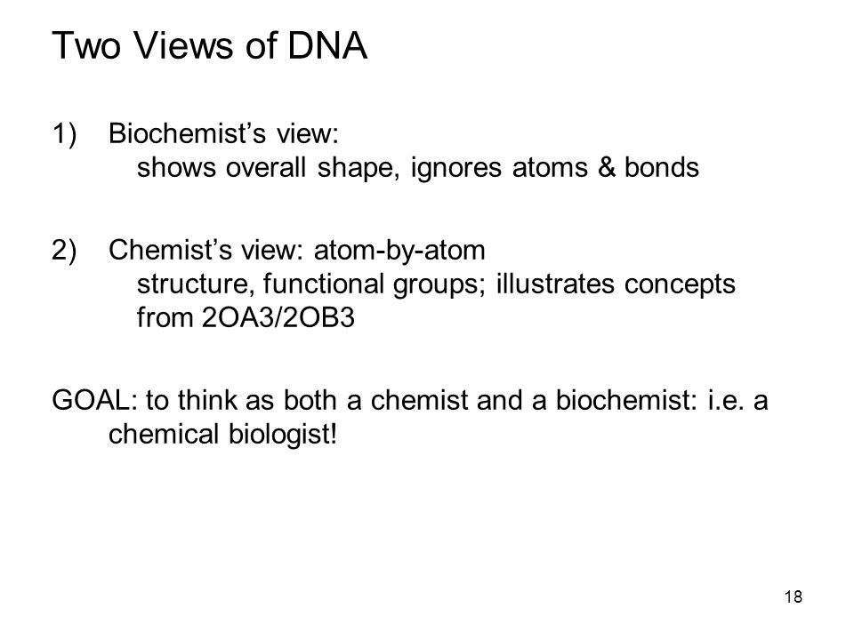18 Two Views of DNA 1)Biochemist's view: shows overall shape, ignores atoms & bonds 2)Chemist's view: atom-by-atom structure, functional groups; illustrates concepts from 2OA3/2OB3 GOAL: to think as both a chemist and a biochemist: i.e.